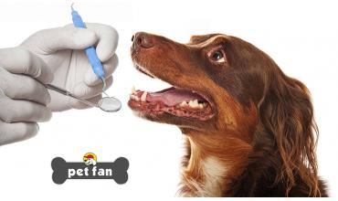 5 στοματικά προβλήματα που απειλούν την υγεία του σκύλου σου