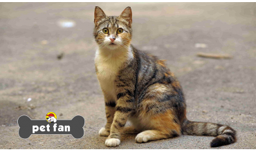 Γάτες που χάνονται: Μπορεί άραγε να επιστρέψουν πίσω;