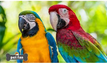 Σε τί οφείλεται και τί εξυπηρετεί η μιμητική ικανότητα των παπαγάλων;