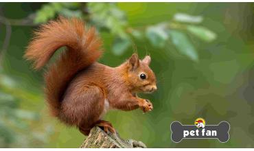 10 συναρπαστικές πληροφορίες για τους σκίουρους