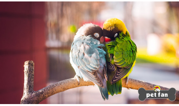 7 πράγματα για τα lovebirds που μας μαγεύουν