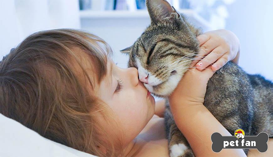 Οικόσιτες γάτες: Πως να τις διατηρήσετε δραστήριες και ευτυχισμένες